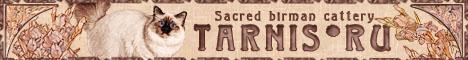 TARNIS*RU Sacred birman cattery